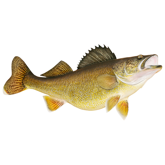 Walleye Decal Fish Measuring Tape Kayak Wraps  Graphics Bass - Boat decals fish   easy removal